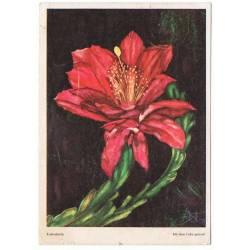 Postal Kaktusblute (Flor...